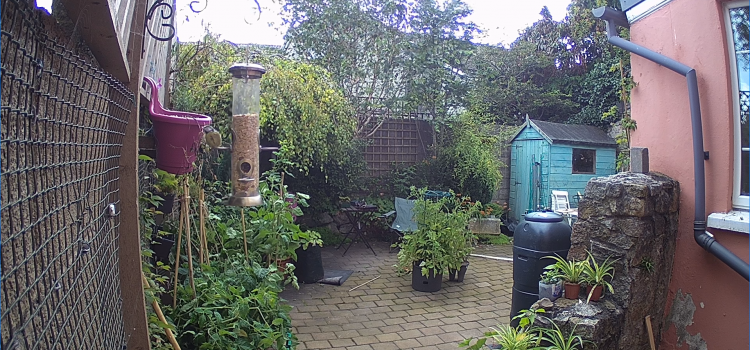 A view of a garden, showing a blue tit eating from a feeder.